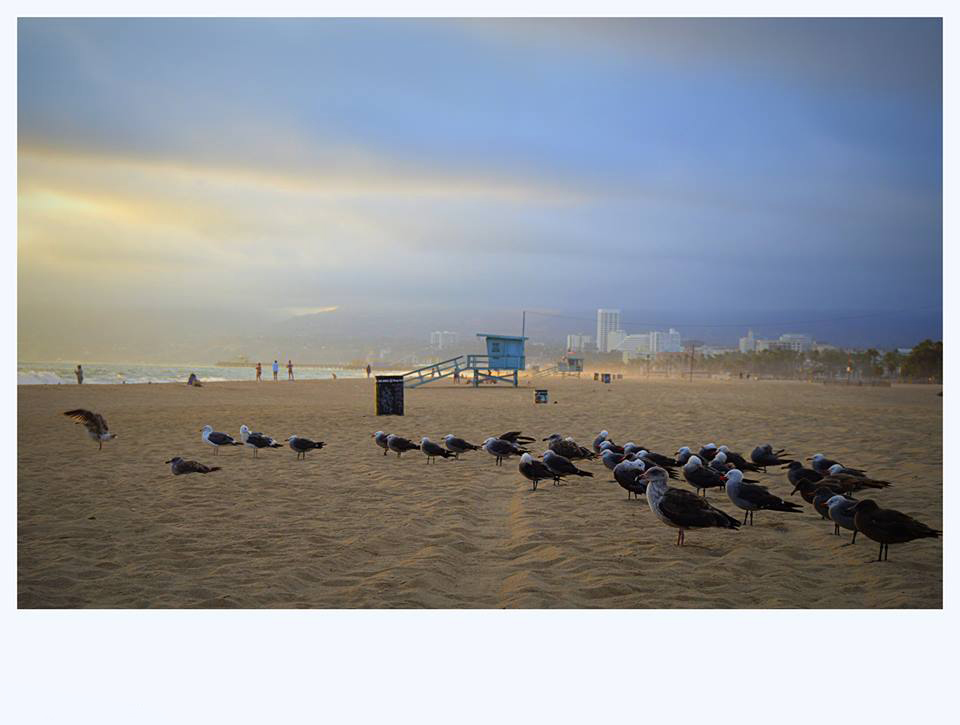 Venice Beach by Enrico Procentese